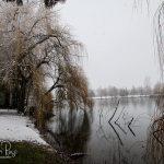 Sardis Park-Weeping Willows - Winter 2019