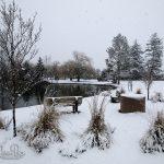 Sardis Park - Winter 2019